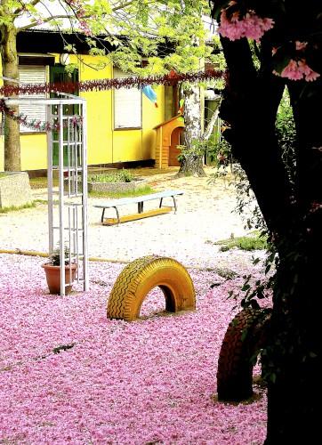 Be-08-Kirschblüte
