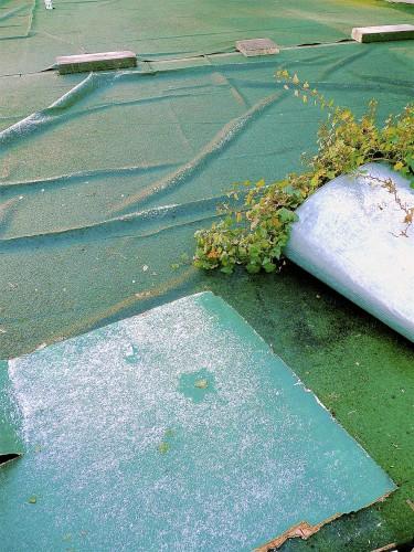 Düss-08-Frozen Ivy