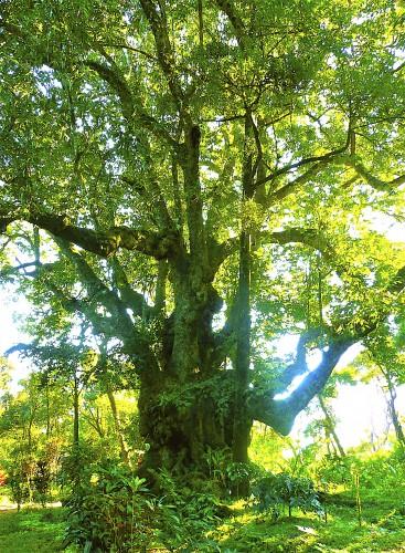 In 12 Magnolia