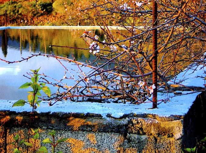 LP-05-Spring meets Winter